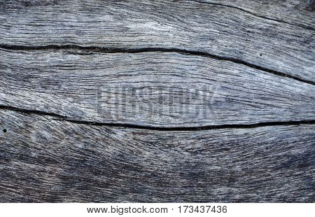 Grey wooden texture close up photo. Monochrome wood background. White old tree near the sea. Curves and lines on rustic timber. Rough timber texture. Sea wood backdrop. Grey old tree on the beach