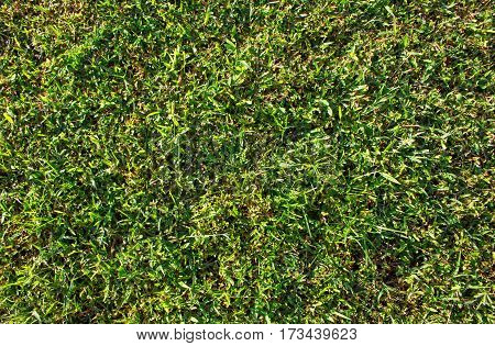 Green grass photo background. Green grass soccer field background. Spring banner of fresh green grass. Grass image for backdrop or seasonal card. Green land texture. Playground area for summer sport