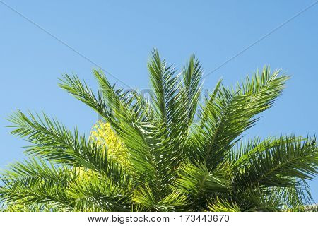 Close-up of palm tree leaves on a sunny day