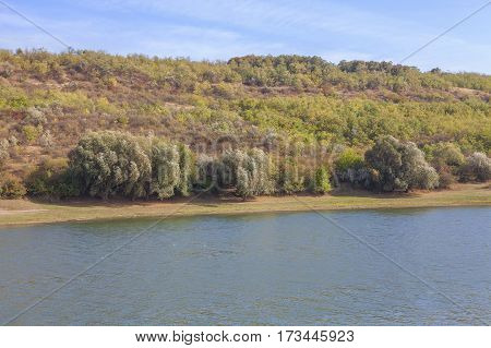 natural landscape with trees growing on the river shore