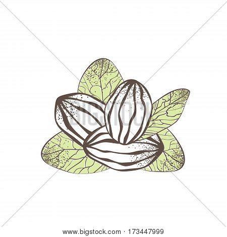 Illustration of Shea Nut Over White Background