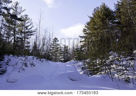 Wide view of a small of fresh snow rising up to a background of green fir trees with a small animal hole midway up at Pabineau Falls near Bathurst New Brunswick on a bright sunny day with blue skies and clouds in February.