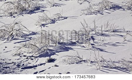 Winter snow scene close view of small bare branches and bushes on a snow covered patch along the highway to Miramichi, New Brunswick, covered in thick glittering ice and snow from a recent ice storm. Shot on a chilly bright blue sky sunny day in February.