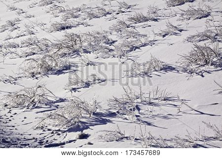 Winter snow scene close view of small bare branches and bushes on a snow covered patch along the highway to Miramichi, New Brunswick covered in thick glittering ice and snow from a recent ice storm. Shot on a chilly bright blue sky sunny day in February.