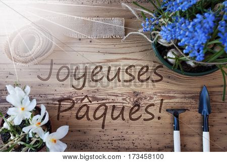 French Text Joyeuses Paques Means Happy Easter. Sunny Spring Flowers Like Grape Hyacinth And Crocus. Gardening Tools Like Rake And Shovel. Hemp Fabric Ribbon. Aged Wooden Background