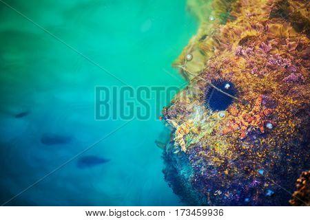 Mediterranean Sea Life Closeup Photo. Underwater Marine Life.