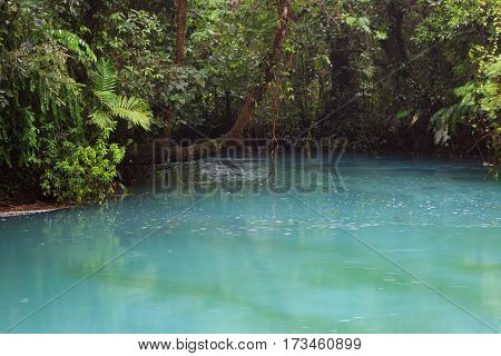 Rio celeste and lush vegetation at Tenorio national park Costa Rica