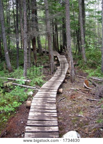 Mountain bike trail twists through the woods on a wooden bridge. poster