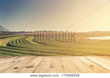 Tea Field And Wood Table Top With Space For Product.