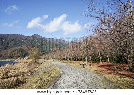 concrete pathway in public park in autumn
