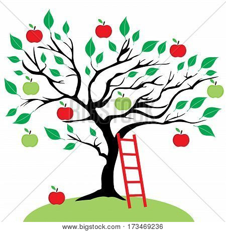 vector illustration of an apple tree with a ladder