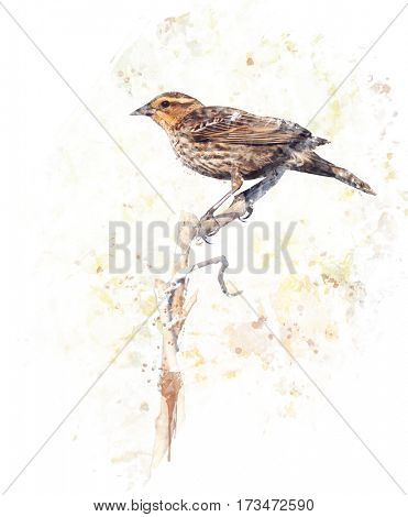 Digital Painting of  Brown Bird Perches on a Branch