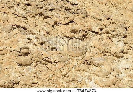the Ammonite Wall in Ramon Crater Negev desert