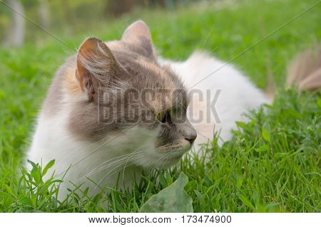 cat sitting on a floral lawn. A close up