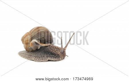 a snail isolated on a white background