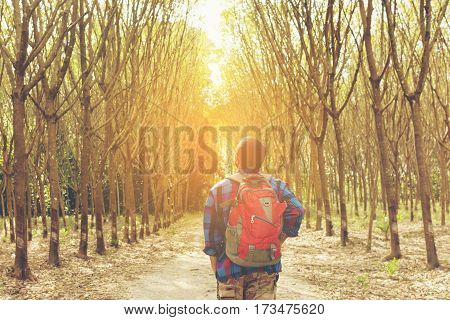 Traveler Asian backpack looking sunshine in the forest  view.Or rear man Asian backpack with forest.