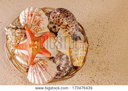 Wicker basket with various kinds of sea shells