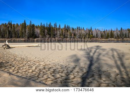 Landscape with tree shadows on textured sand in sunny day