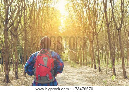 Back of traveler backpack looking sunshine in the forest  view.Or man Asian backpack with forest.