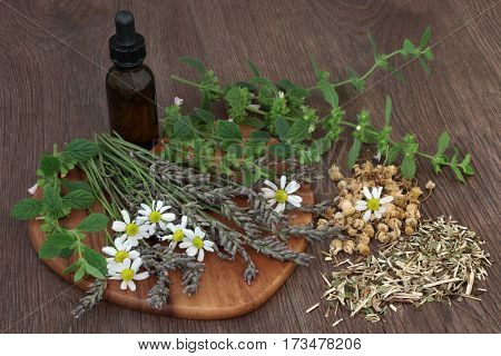 Calming and sleeping herb selection of chamomile, lavender, lemon balm and skullcap used in natural herbal medicine with essential oil bottle on oak background.