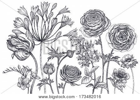 Bouquet of spring flowers blooming. Hand drawing tulip African lily ranunculus anemones lilac freesia black ink on white background. Vector illustration art floral design. Vintage engraving