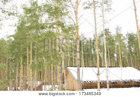 house in the woods in winter pine natural texture winter nature wooden house