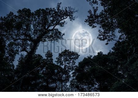 Silhouette The Branches Of Trees Against Night Sky With Full Moon.