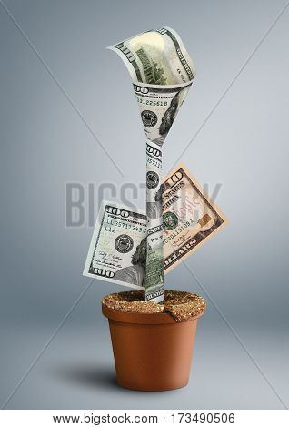 growing wealth creative concept money as flower in pot