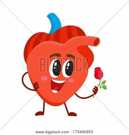Cute and funny, smiling human heart character holding a rose, cartoon vector illustration isolated on white background. Healthy human heart character, cardiovascular system health care element