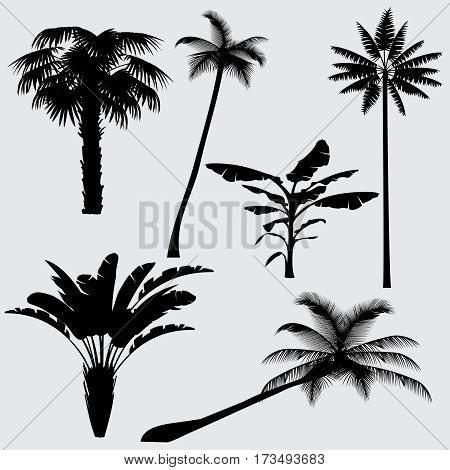 Tropical palm tree vector silhouettes isolated on white background. Black silhouette palm tree, illustration of coconut palm