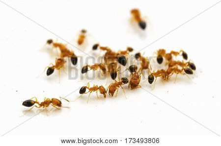 Ants on white floor.Can be used as wallpaper