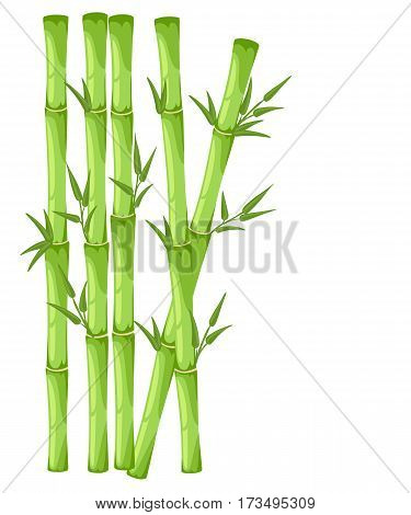 Captivating bamboo vector pictures