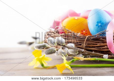 Easter eggs and spring flowers in nest on wooden table over white background. Beautiful colorful eggs decorated, painted. Bright colors. Spring Holidays border art design Isolated on white background