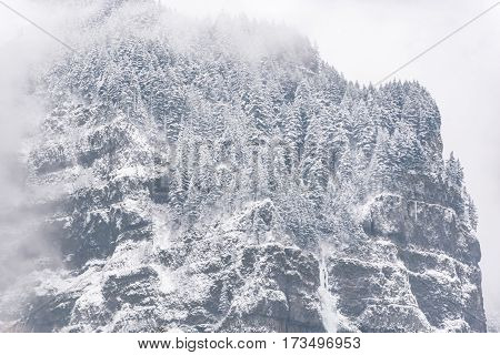 Picturesque view of snow-covered pine trees growing on steep cliff shrouding in thick fog