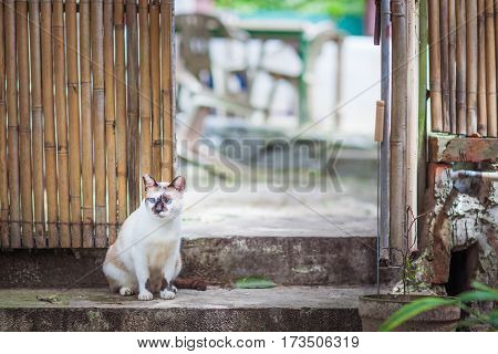 Cat relaxing in backyard summer, Hong Kong