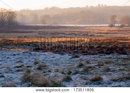 Frosty landscape in Richmond Park in London