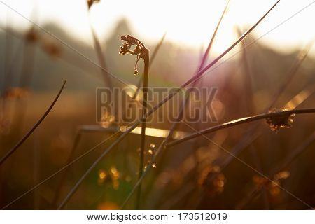 Thick Stems Of Grass In Golden Sunlight