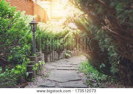 Beautiful landscape design, garden path in stone tiles, evergreen bushes, fir trees, blue spruces and shrubs in sunlight. Summer garden or park design. Flare effect