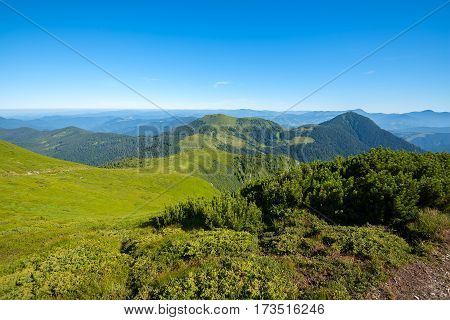 Magic landscape - green mountains covered with green grass and coniferous forests at sunny morning. Array Marmarosy - Carpathian Mountains Ukraine spring