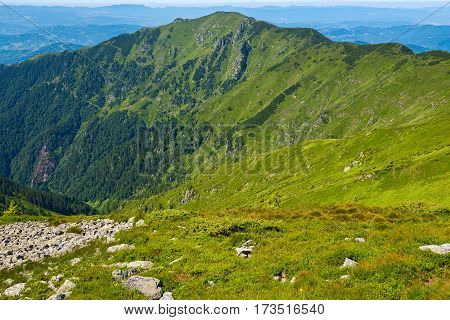 Green Mountain Ridge  Covered With Green Grass And Coniferous Forests