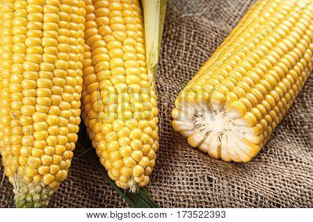 sweet corn on sackcloth half of corn some corn peeled some do not closeup
