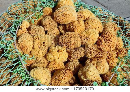 Natural sponges in netting on the quayside Heraklion Crete Greece Europe.