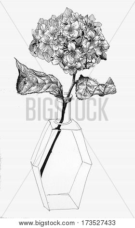 digitally still life drawing stipple style of Hydrangea flower