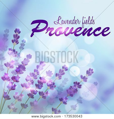 Lavender background for perfume, aroma therapy, soap, cosmetic, perfumery products design. Provence fields of blooming lavender on background of blue blurred sun light