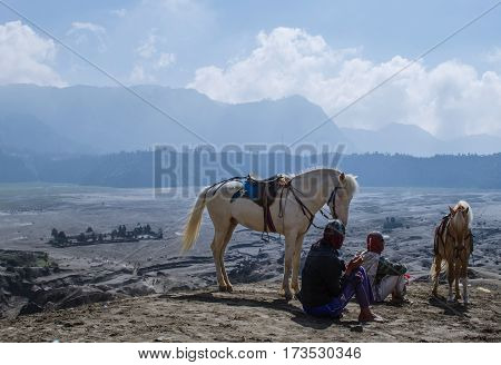 horses for service tourist at Bromo Mountain, Tengger Semeru national park, East Java, Indonesia.