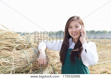 young chinese woman agronomist working in golden field