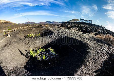 Vineyards Of La Geria On Volcanic Soil