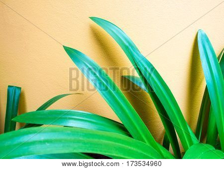 Ornamental green leaves and yellow concrete wall