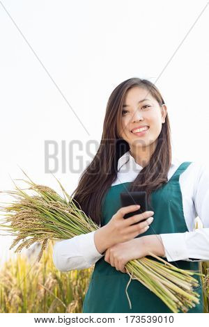 young chinese woman agronomist with golden cereal