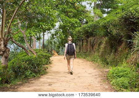 Active caucasian blonde woman enjoying fresh air and pristine nature while tracking among tea plantatons near Ella, Sri Lanka. Backpecking outdoors tourist adventure.
